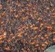 Cabecera Blog - Densidad Manifestaciones